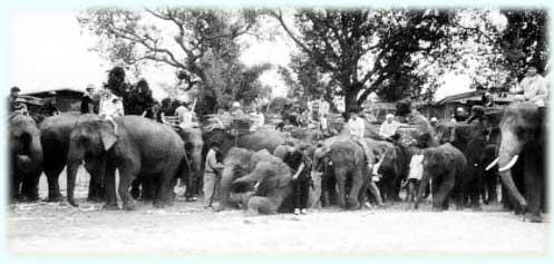 บวชนาคช้าง